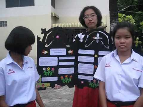 PRS-โครงงานภาษาไทยคำทับศัพท์.wmv