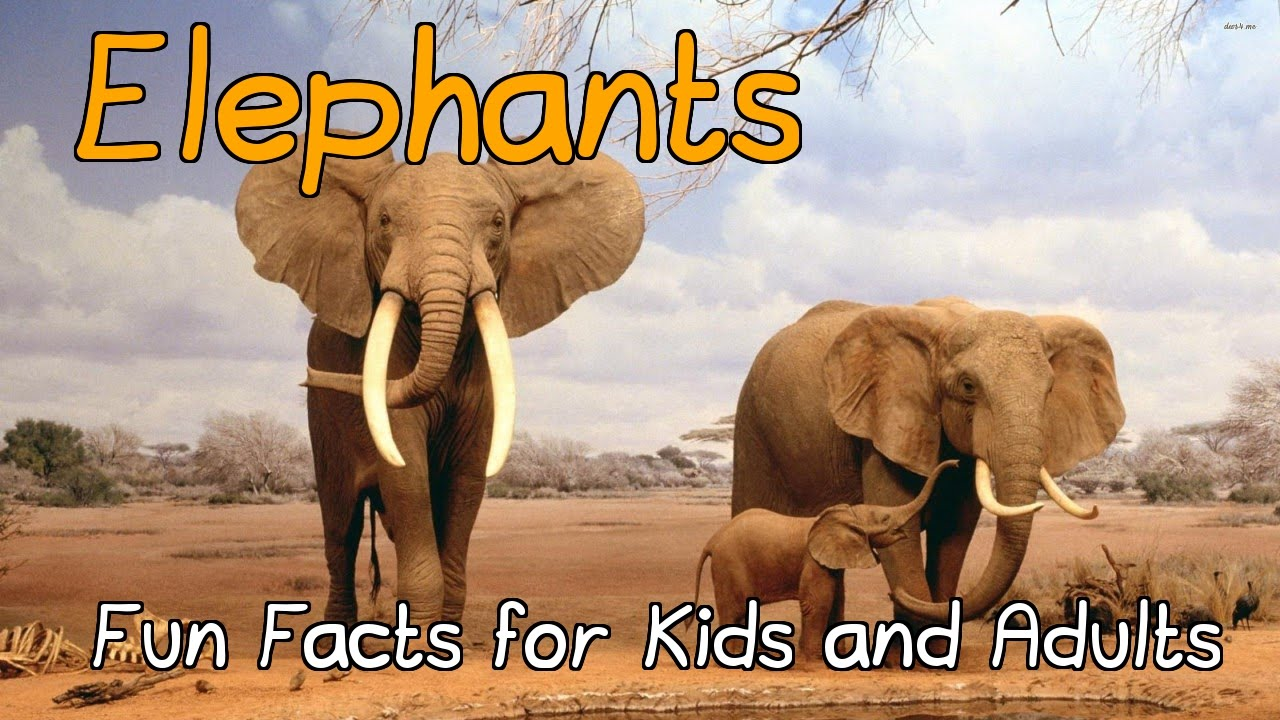 Interesting Facts About Asian Elephants