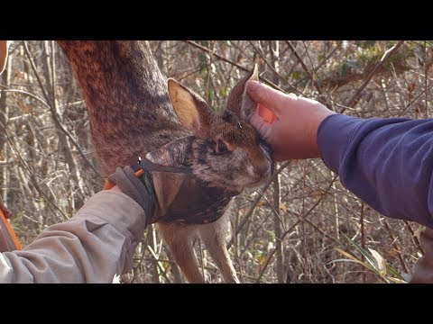 Great KY Swamp Rabbit And Cottontail Hunt