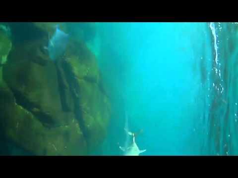 Surf Fishing UNDERWATER View