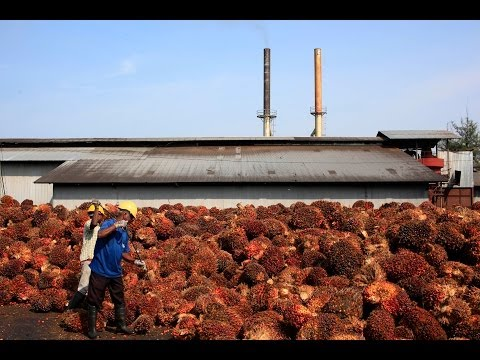 Palm Oil Companies To Produce Ethanol