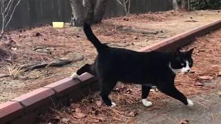 のらくろと呼びたくなる猫 存在感ある黒白の毛、のらくろってキャラクターに思えて仕方ない。 ☘ 公園で出会ったかわいい野良猫との交流動...
