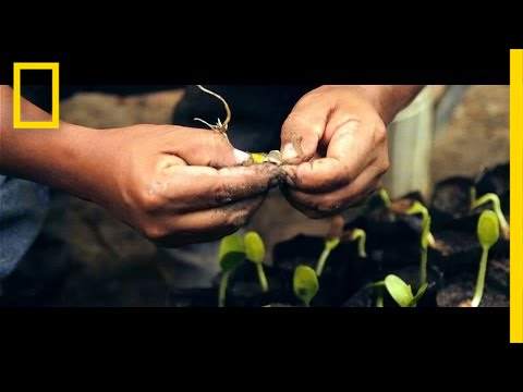 Rain Forest Hero Plants Over 30,000 Trees to Save the Amazon | Short Film Showcase