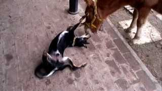 Mira Lo Que Le Hace El Caballo Al Perro...