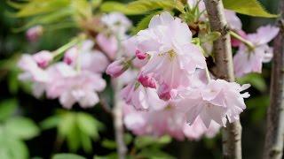 季節が巡り、それぞれの庭にそれぞれの花が咲く・・・春は歓び、そして...