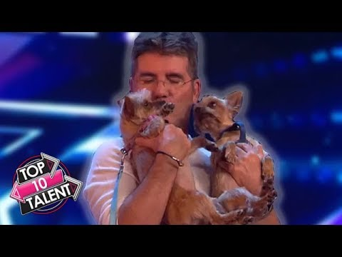 Simon Cowell's TOP 10 Favourite DOG Auditions On Britain And America's Got Talent