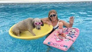 El primer baño de mi perro en la piscina / Funny dogs