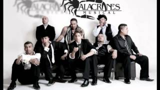 mix alacranes musical