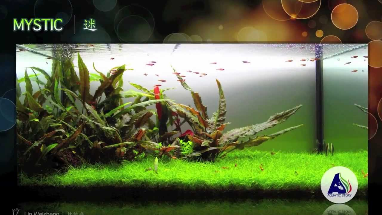 Our Freshwater Aquascapes 2010 ~ 2012   YouTube