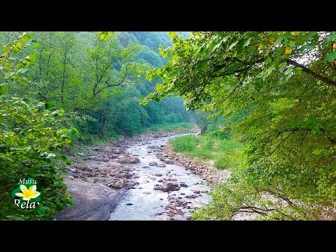 8 Hours Relaxing Nature Sounds - River Noise And Birdsong