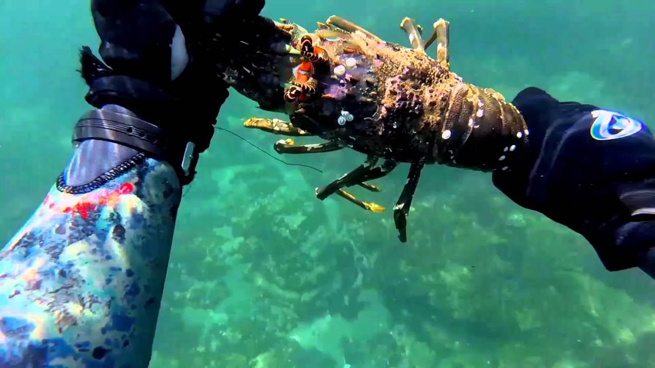 Shallow crave(shorediving sunshine coast for crayfish