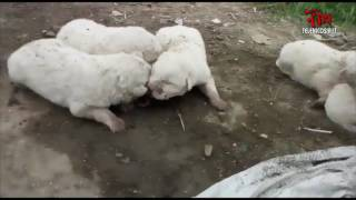 Ritrovati dal Meet Up Nicosia 5 Stelle cinque cagnolini abbandonati