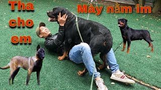 Huấn Luyện Chó Nghiệp Vụ | Săn Bắt Ẩm Thực Vùng Cao