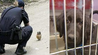 Cute Animals That Got Arrested For Strange Reasons