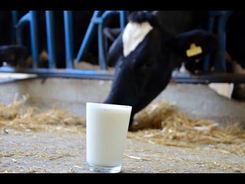 'İneklerde süt verimini ve tonajını artırmak, sütün kalitesini düşürüyor'