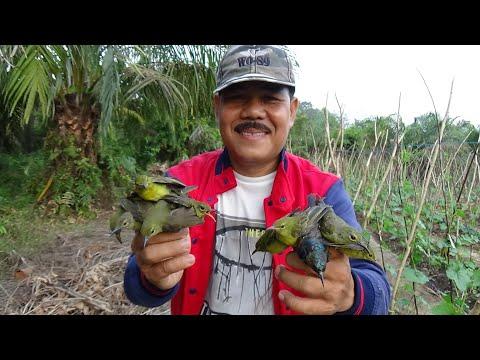 Jebakan Khusus Burung Kolibri