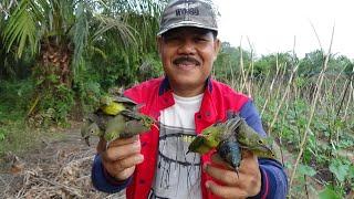 Download Mp3 Jebakan Khusus Burung Kolibri
