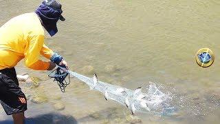 Wow Pescador Atrapa lisas en la desembocadura de río