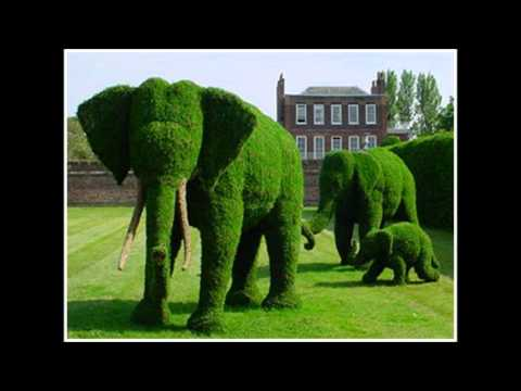 Topiary - the art of shaping trees & shrubs into art forms ~ courtesy of Pinterest