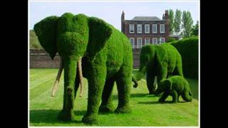 Topiary - the art of shaping trees & shrubs into art forms ~ courtesy of Pinterest thumbnail