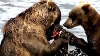 Ведмежа рибалка(Bear Hunting)