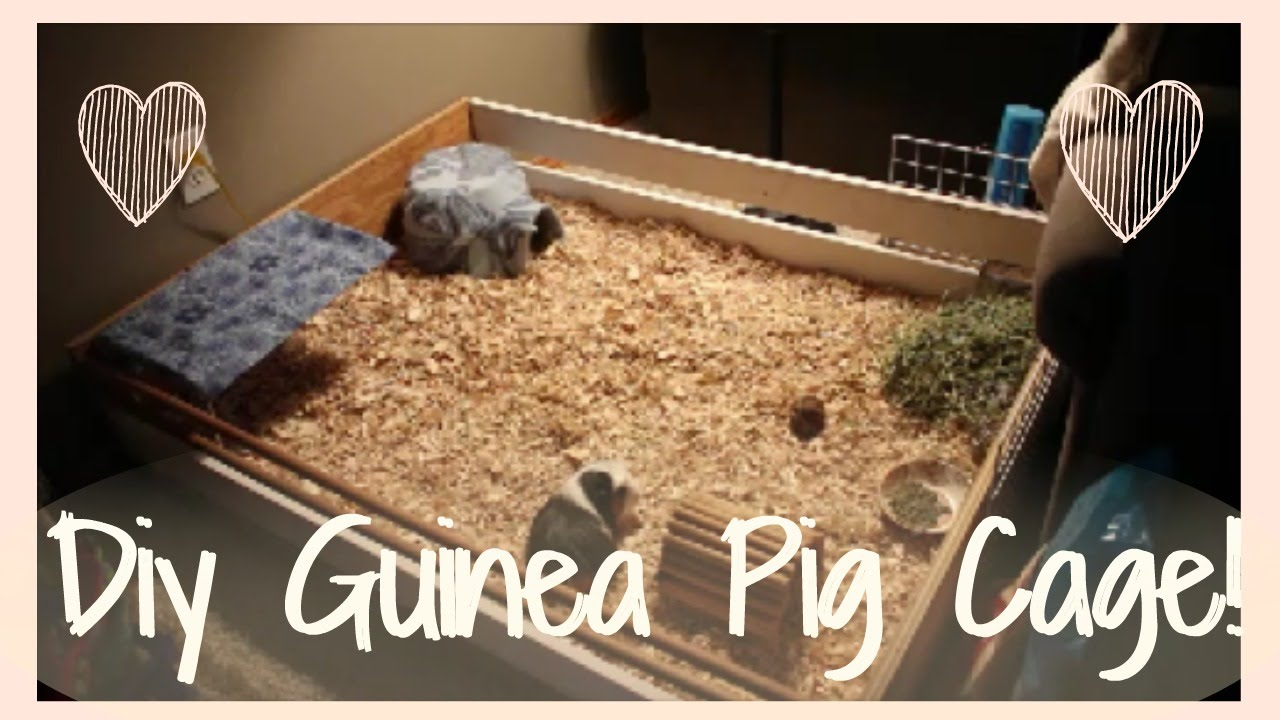 Diy guinea pig cage how i built my new cage youtube for Diy guinea pig things