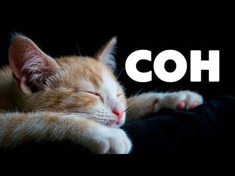 СОН. Как улучшить качество сна.