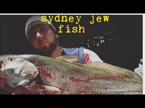 Parramatta River Jewfish