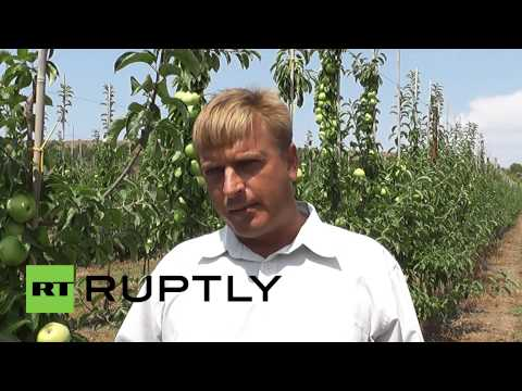 Russia: Sanctions provide Crimean farmers with window of opp