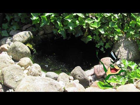 Tiny frog pond teeming with life!