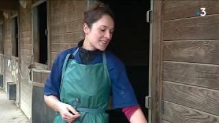 Itinéraires Bretagne : rencontre avec un dentiste et un ostéopathe équin