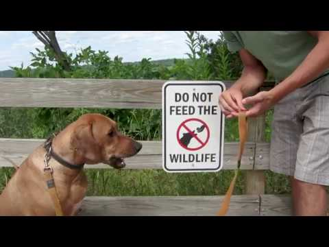 Rhodesian Ridgeback Training Failures