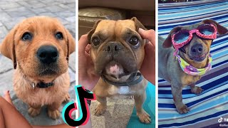 Awesome Dogs of TikTok ~ Cutest & Funniest Puppies on TIK TOK ~ 2020