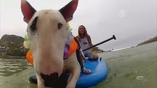 Собаки-сёрфингисты соревновались в Бразилии (новости)