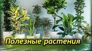 видео Растения | Современная женщина