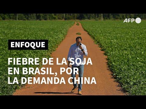 AFP Español: En Brasil, la fiebre de la soja sube por la demanda china | AFP