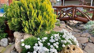 Цветущие многолетники и травы для солнечных участков