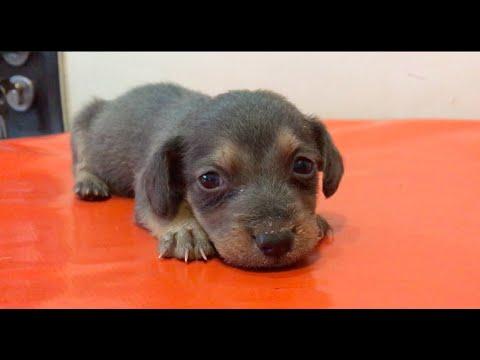 Puppy Found In Gutter- SOS