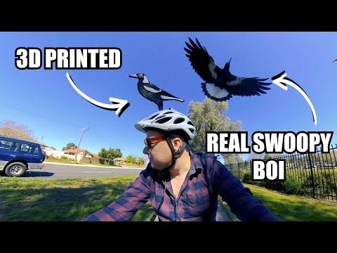 Swooping Aussie Magpie Versus 3D Printed Defences