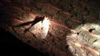 今日もクワガタ採集に行ってきましたが、8月に入った為殆どカブトムシ...