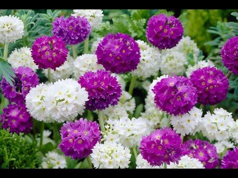Какие цветы нужно посеять в конце февраля-начале марта.23.02.2020