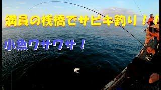 【釣りしよ。】サビキはコマセ大事! thumbnail