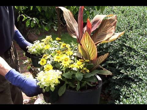 "planting canna ""tropicanna"""