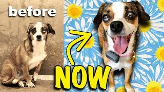 3 yr Old Homeless Dog Wags Her Tail First Time | As Seen on The Dodo