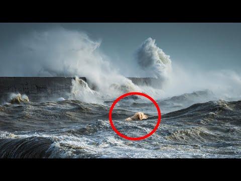 Мужчина НЕ СМОГ сдержать слез, когда увидел КОГО алабай тащит из воды..
