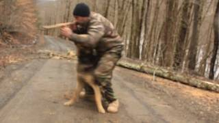 German Shepherd Training For Special Force Tactical Training With James Brown...