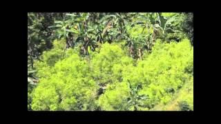 Nación Indígena - Documental