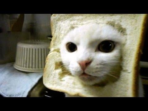 Epic Cat Fails 💥 😻 [Funny Pets]