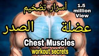 عضلة الصدر ( البنش ) - أسرا تقوية و شد عضلات الصدر | (Chest muscles exercises secrets  (English