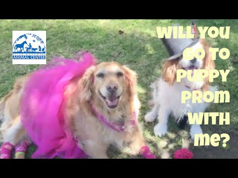 Animal Promposals Youtube